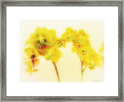 Orchid Collection 'summer' Framed Print