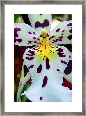 Orchid Cross Framed Print