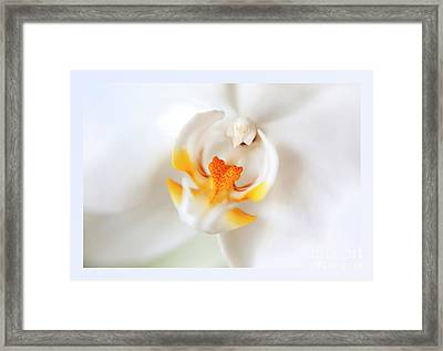 Framed Print featuring the photograph Orchid Detail by Ariadna De Raadt