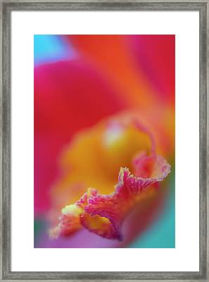 Orchid Detail Framed Print