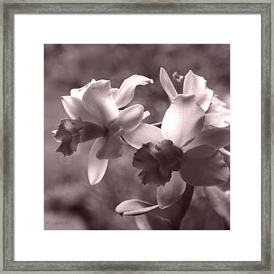 Framed Print featuring the photograph Orchid Dream - Square by Kerri Ligatich