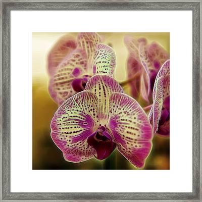 Orchid Dreams Framed Print by Bill Tiepelman