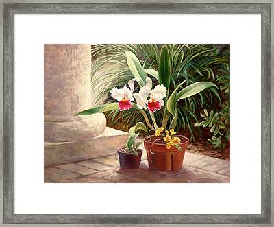Orchid Duo Framed Print by Laurie Hein
