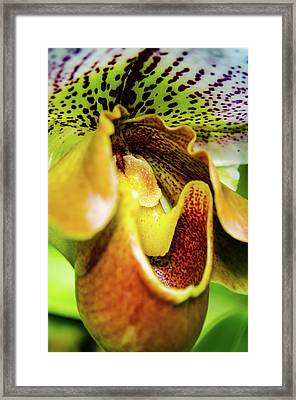 Orchid Faces Framed Print