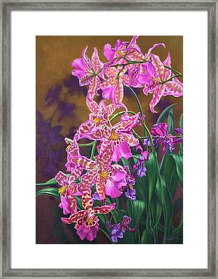 Orchid Fever 3 Miltonia Framed Print by Fiona Craig
