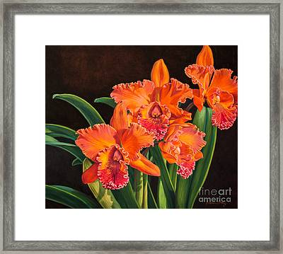 Orchid Fever 4 Volcano Queen 1 Framed Print by Fiona Craig