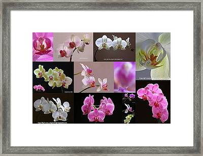 Orchid Fine Art Flower Photography Framed Print