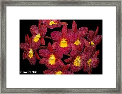 Orchid Floral Arrangement Framed Print