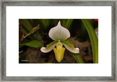 Orchid Flower 42 Framed Print