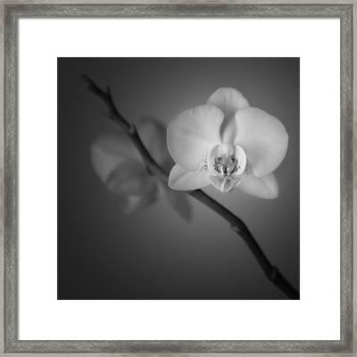 Orchid Flower Still Life Framed Print by Ian Barber