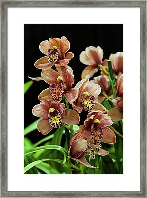 Framed Print featuring the photograph Orchid Flowers  by Catherine Lau