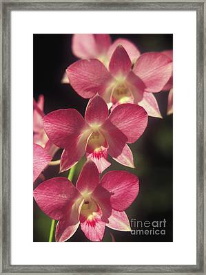 Orchid Flowers Framed Print by Kyle Rothenborg - Printscapes