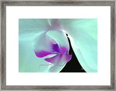 Orchid Goddess Framed Print