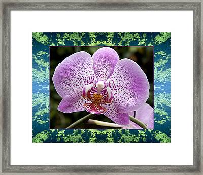 Framed Print featuring the photograph Orchid Goodness by Bell And Todd