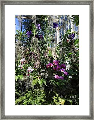 Orchid Greenhouse Framed Print by Carol Groenen