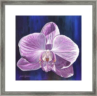 Orchid I Framed Print