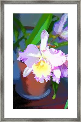 Orchid Image Framed Print by Paul Price