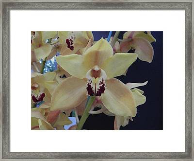Framed Print featuring the photograph Orchid Impression by Manuela Constantin