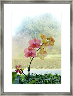 Orchid In Portrait Framed Print