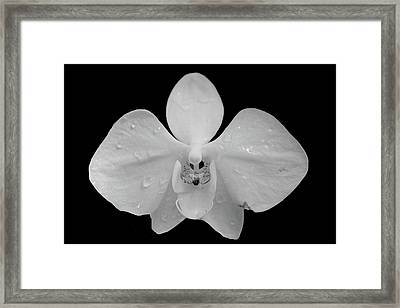 Orchid In The Rain Framed Print