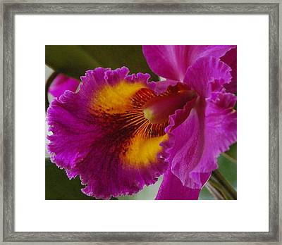 Framed Print featuring the photograph Orchid In The Wild by Debbie Karnes