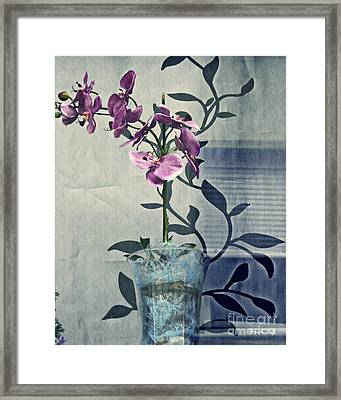 Orchid In The Window Framed Print