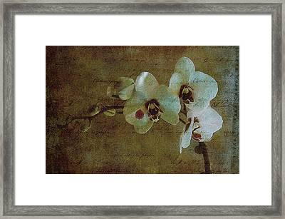 Orchid Framed Print by Inesa Kayuta