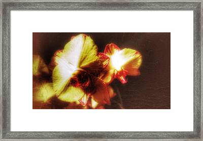 Framed Print featuring the photograph Orchid by Isabella F Abbie Shores FRSA