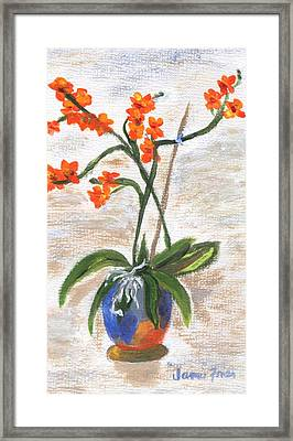 Framed Print featuring the painting Orchid by Jamie Frier