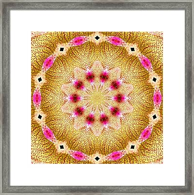Orchid Kaleidoscope 11 Framed Print