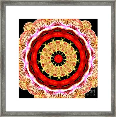 Orchid Kaleidoscope 6 Framed Print