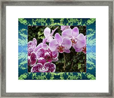 Framed Print featuring the photograph Orchid Kindness by Bell And Todd