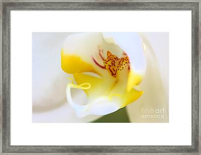 Orchid Macro Framed Print by Jared Shomo