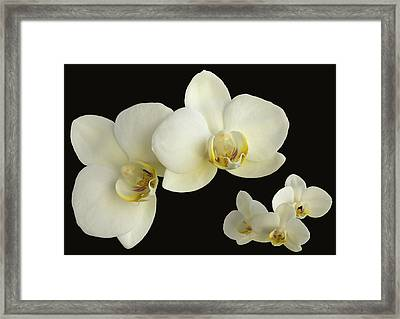 Orchid Montage Framed Print by Hazy Apple