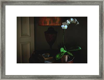 Orchid Morning Framed Print by Paul Green