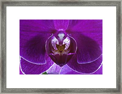 Orchid No. 1 Framed Print by Harry H Hicklin