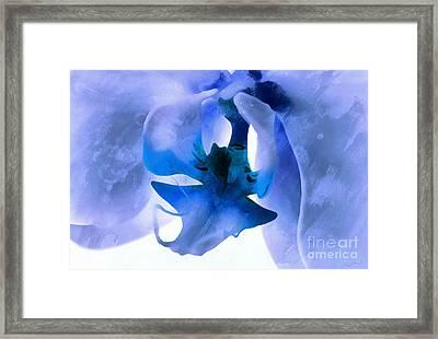 Orchid Of Blue Framed Print