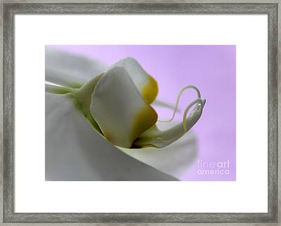 Orchid Of Calm Framed Print by Krissy Katsimbras