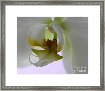 Orchid Of Glory Framed Print by Krissy Katsimbras