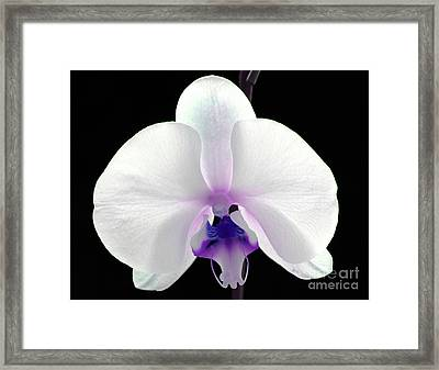 Orchid Of Grace Framed Print by Krissy Katsimbras
