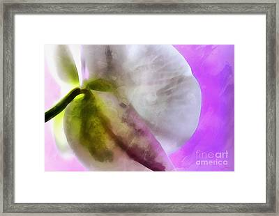 Orchid Of Inspiration Framed Print by Krissy Katsimbras