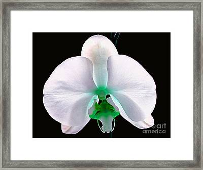 Orchid Of Mystery Framed Print by Krissy Katsimbras