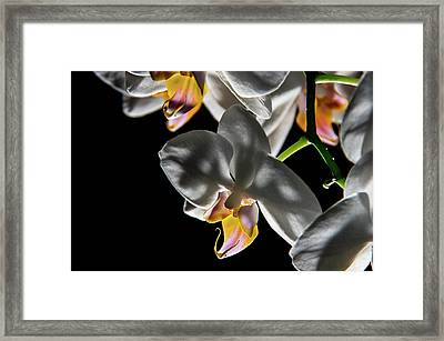 Orchid On Fire Framed Print