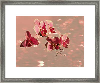 Orchid Petals In Pink Framed Print by Irma BACKELANT GALLERIES