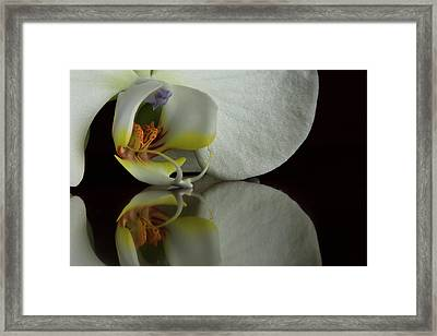 Orchid Reflected Framed Print