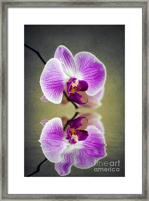 Orchid Reflections Framed Print by Ian Mitchell