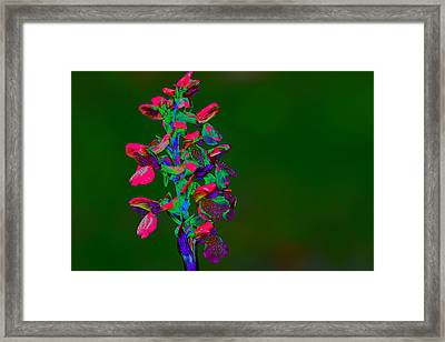 Orchid Framed Print by Richard Patmore