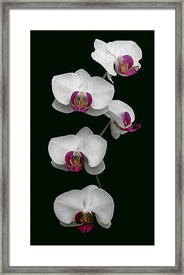 Orchid Sequence  Framed Print