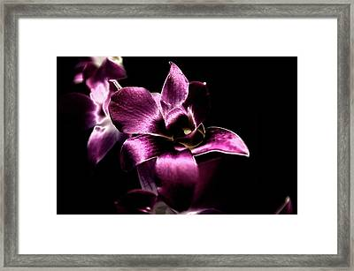 Orchid Framed Print by Sheryl Thomas