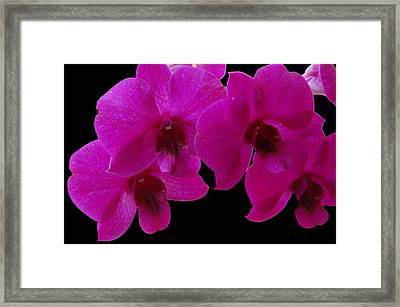 Orchid Song Framed Print